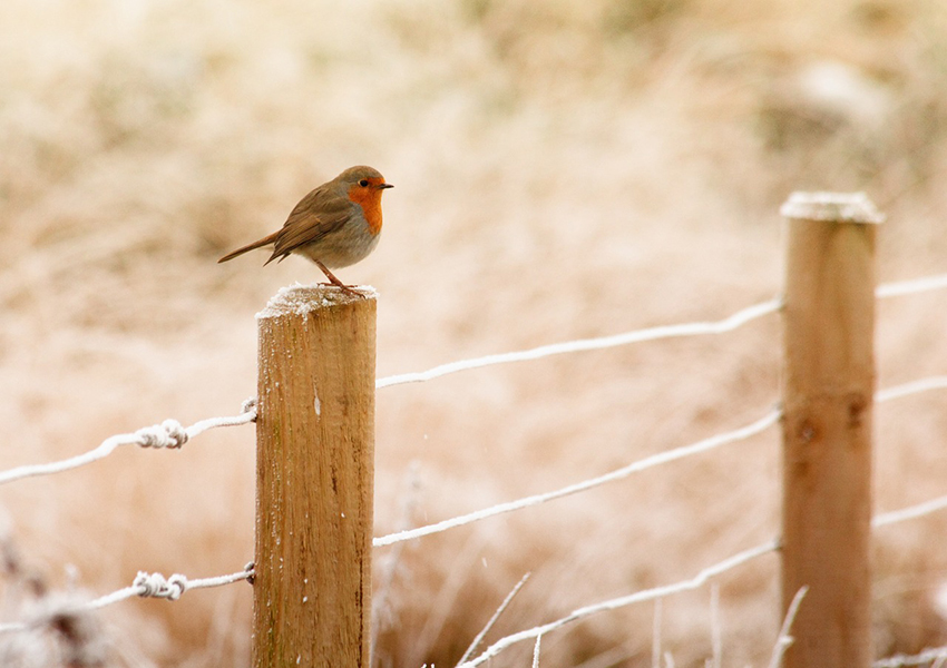 b2bcards corporate christmas eacrd ref:b2b-ecards-scenery-animals-robins-colours-861.jpg, Scenery,Animals,Robins, Colours