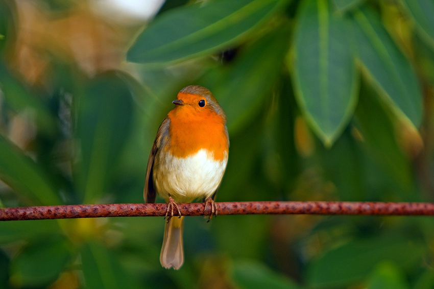 b2bcards corporate christmas eacrd ref:b2b-ecards-scenery-animals-robins-colours-863.jpg, Scenery,Animals,Robins, Colours